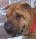 Deary was adopted she will be living in Miami with her new parents and 3 dogs brothers and dog sister.