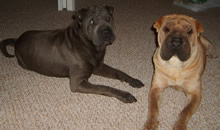 Harley and Bozley are happy at their new home in Orlando.