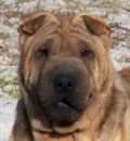 Holly is happily living in South Carolina with her new family. She enjoys car rides and is winning over the neighborhood with her great personality.