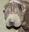 Smokey has found his forever home in Daytona Beach, FL. Congratulations to Smokey and his new family.