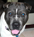 Spanky is happy in Tampa, FL with his new forever family. Way to go Spanky.