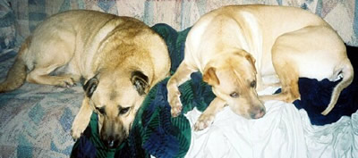 Cappy & Kokomo