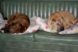 Truman & Reba