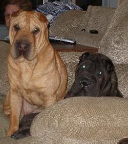 Winston & Ruffles