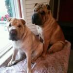 #89 Lilo & Teddy