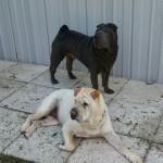 bogie and lulu