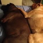 #49 Buddy & Toby