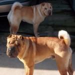 #87 Teddy & Lilo