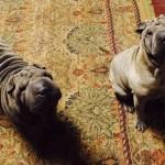 #72 Skye & Sadie